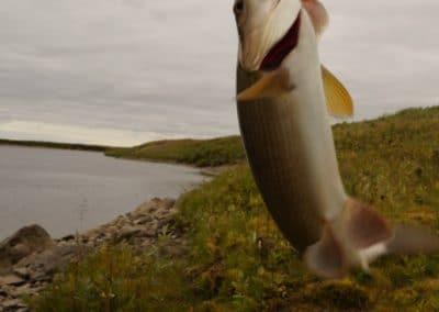 Летняя рыбалка в Заполярье